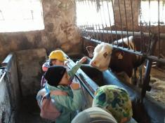 Den zvířat v 1.třídě